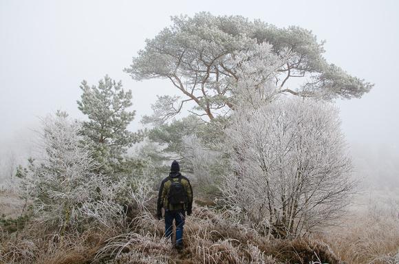 Weg im Hamberger Moor